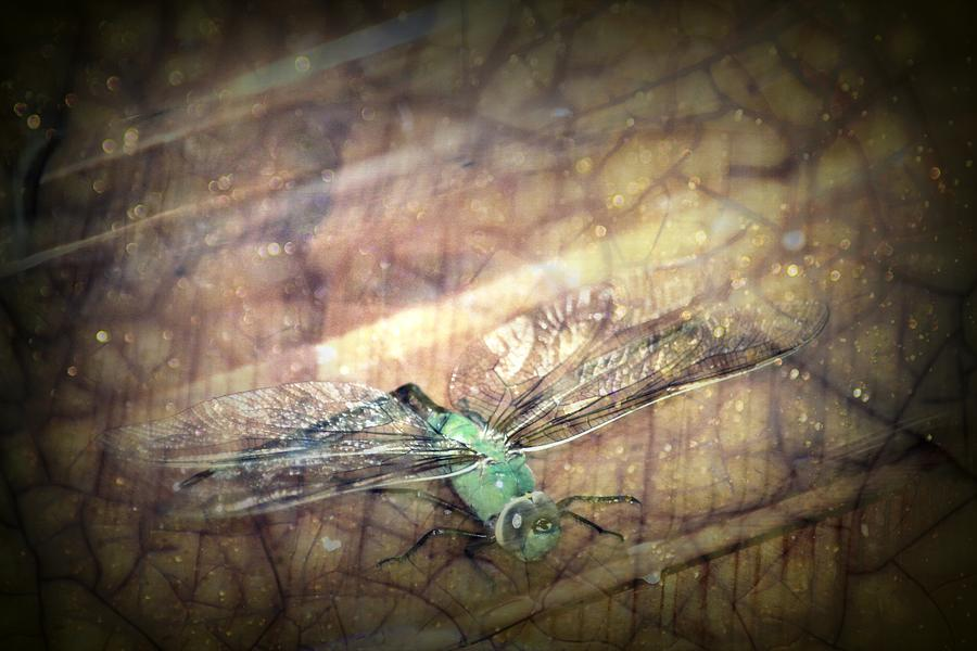 Dragonfly Photograph - Dragonfly Leap Of Faith by Dawna Morton