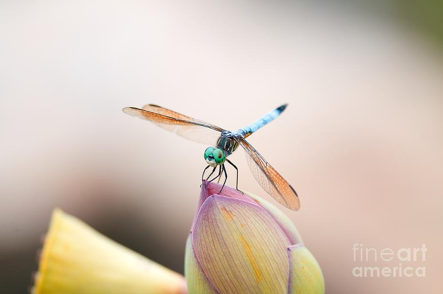 Dragonfly by Miguel Celis