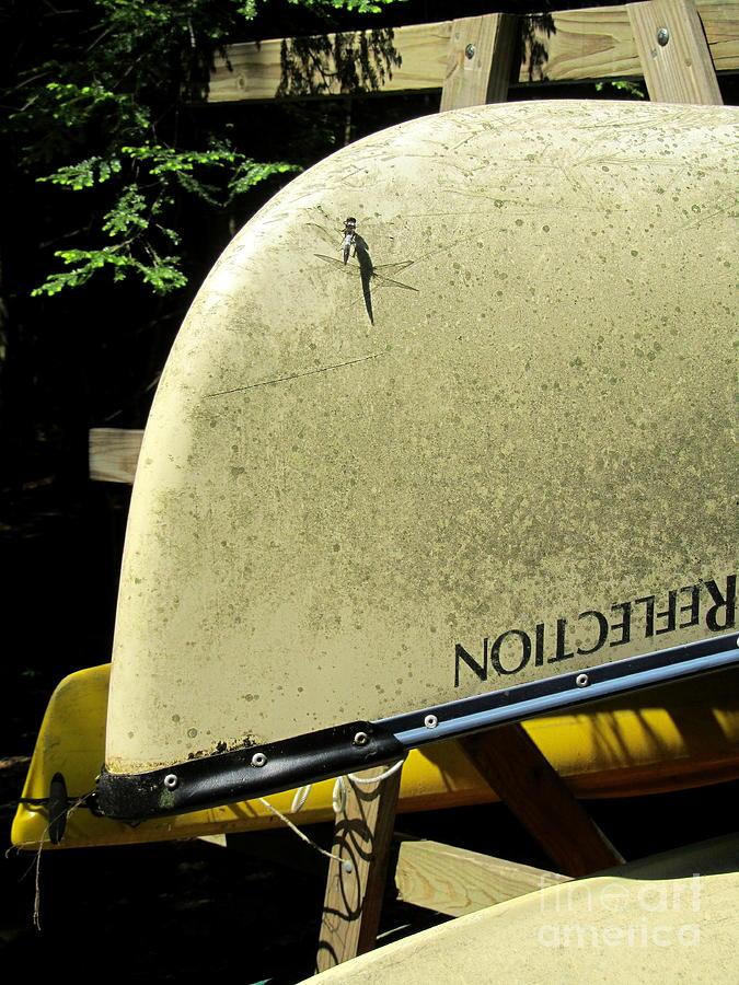 Canoe Photograph - Dragonfly Resting by Avis  Noelle