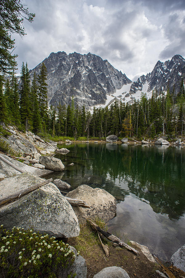 Enchantments Photograph - Dragontail Forest Scene by Mike Reid
