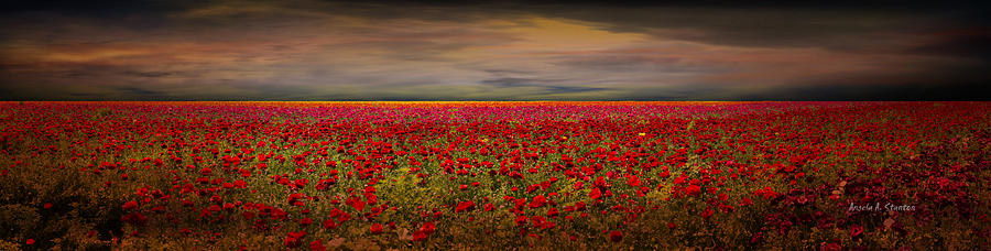 Drama Photograph - Drama Over The Flower Fields by Angela A Stanton