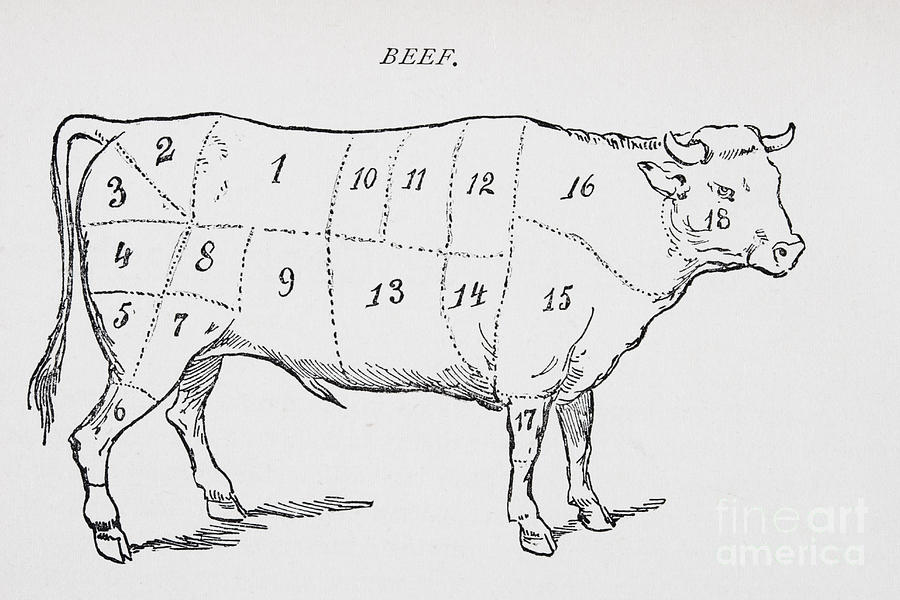 Beef Alert New York Strip besides How To Draw A Cow likewise Settimana Del Maiale moreover Cuts of animals1 also Stock Image Cattle Skeleton Illustration Showing Image40657191. on beef cuts