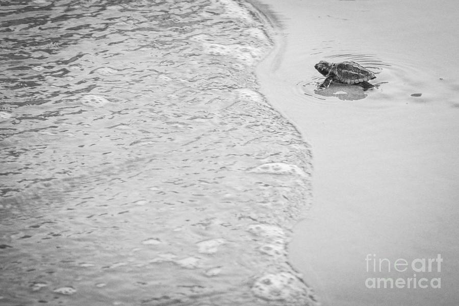 Loggerhead Turtle Photograph - Dream Big by Matthew Trudeau