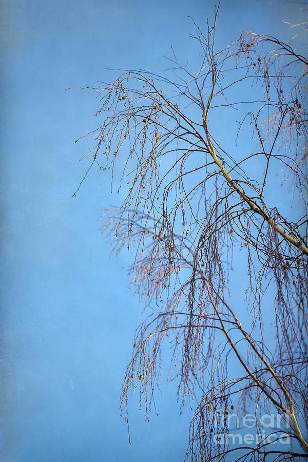 Weep Photograph - Dream Blue by Evelina Kremsdorf