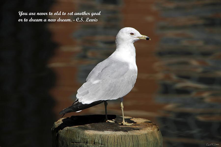 Sea Gulls Photograph - Dream by David Simons