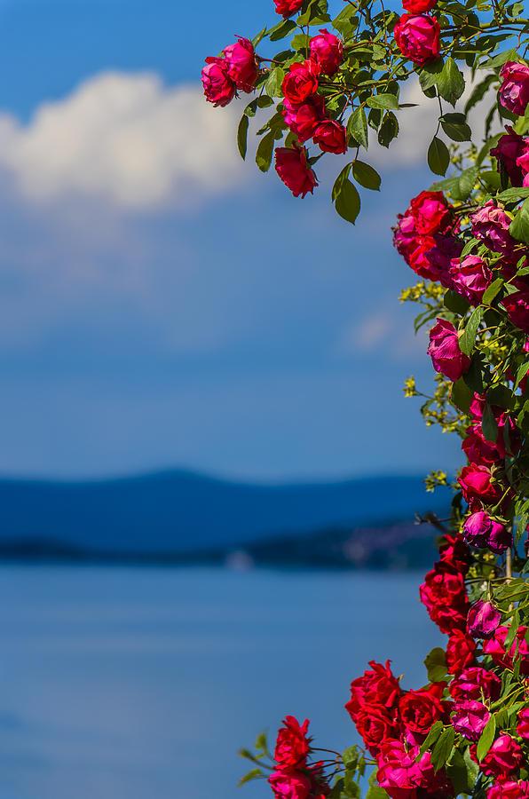 Sunrise Photograph - Dream Full Of Roses by Sotiris Filippou
