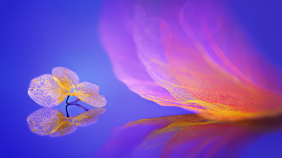 Macro Photograph - Dream by Sophie Pan