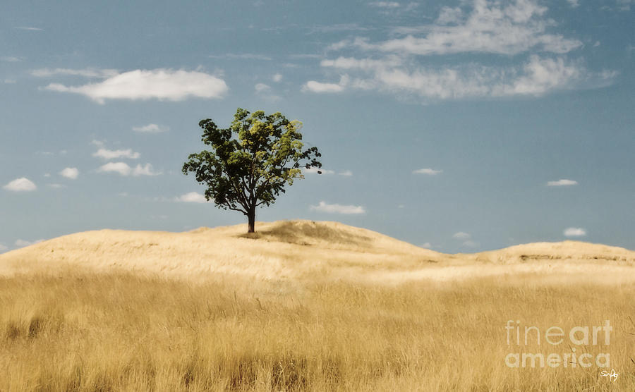 Dream Photograph - Dream Tree by Scott Pellegrin