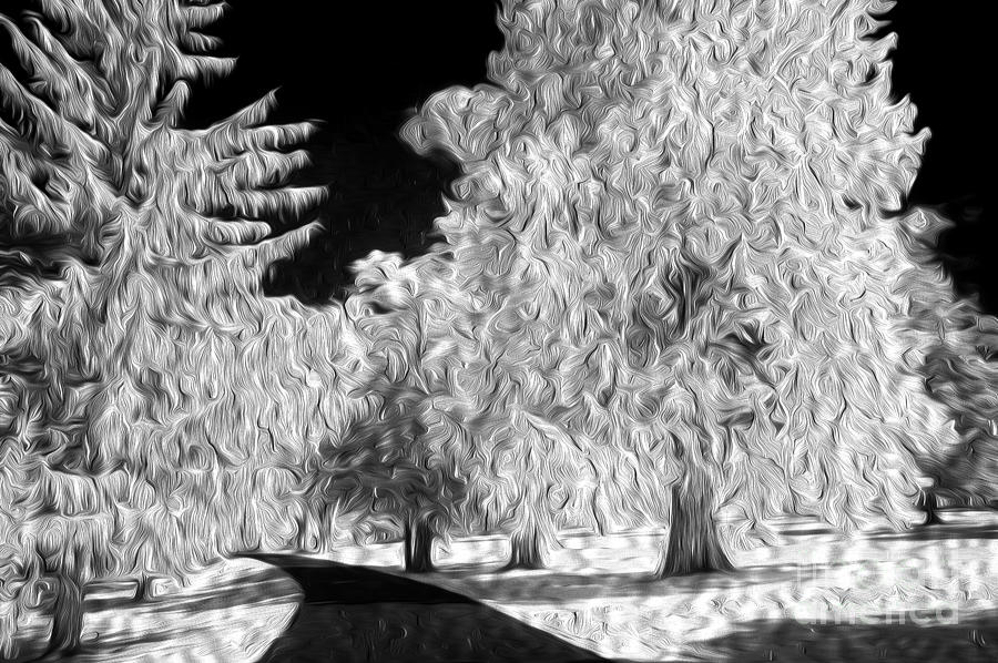Trees Photograph - Dream Trees by Paul W Faust -  Impressions of Light