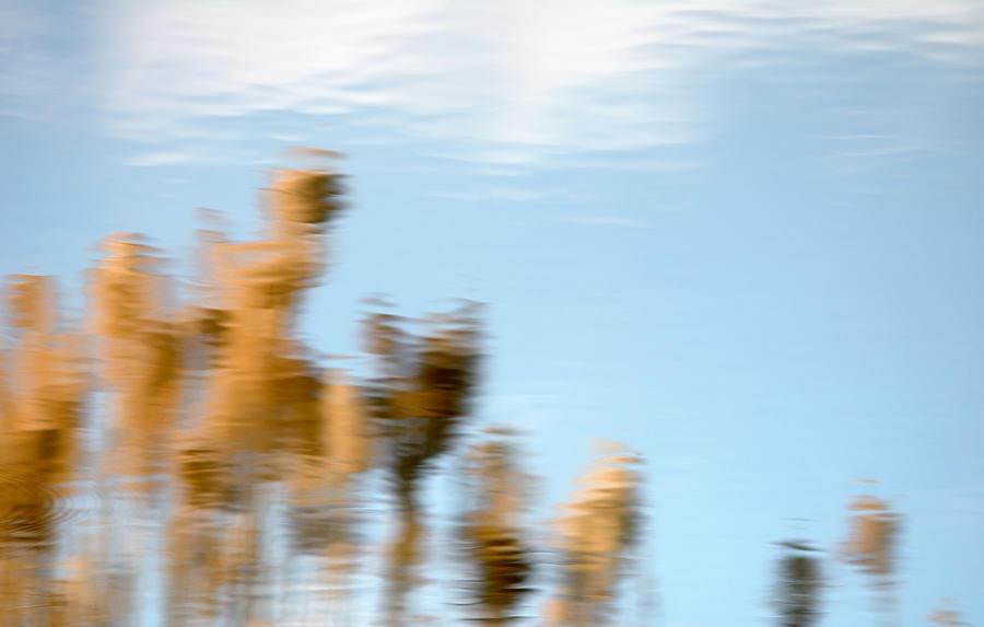 Nature Photograph - Dream World by Steven Milner