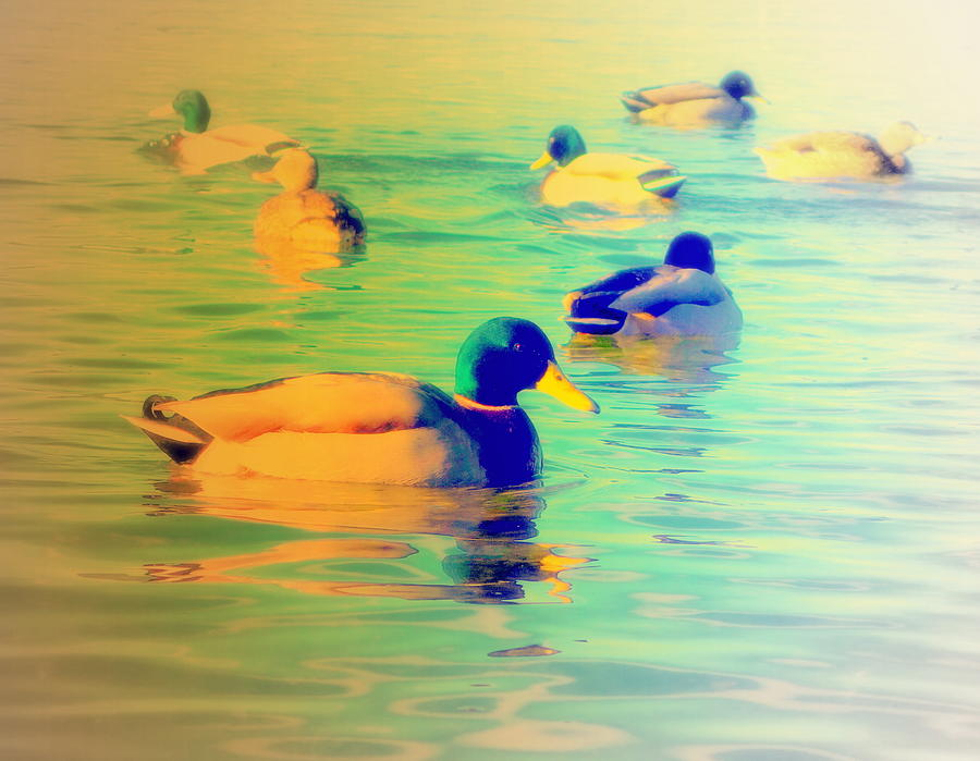Duck Photograph - Ducks Dreaming Of Dreaming Ducks  by Hilde Widerberg