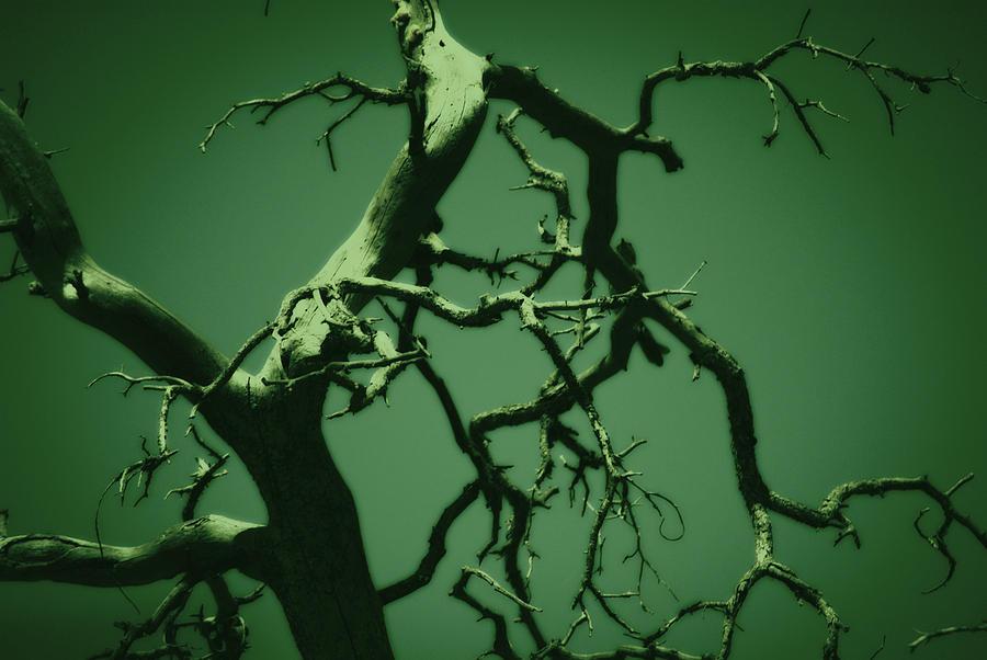 Tree Photograph - Dreaming Green by Paulina Roybal