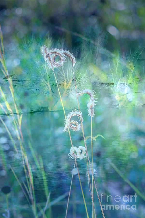 Blue Photograph - Dreaming In Blue by Carol Groenen