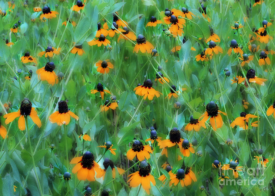 Flowers Photograph - Dreaming In Orange by Judi Bagwell
