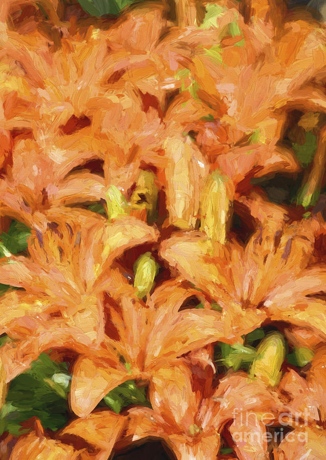 Dreaming Lilies Photograph