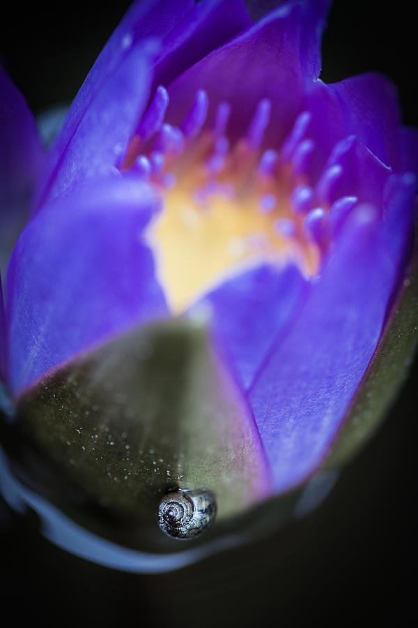 Snail Photograph - Dreaming Mollusk  by Priya Ghose