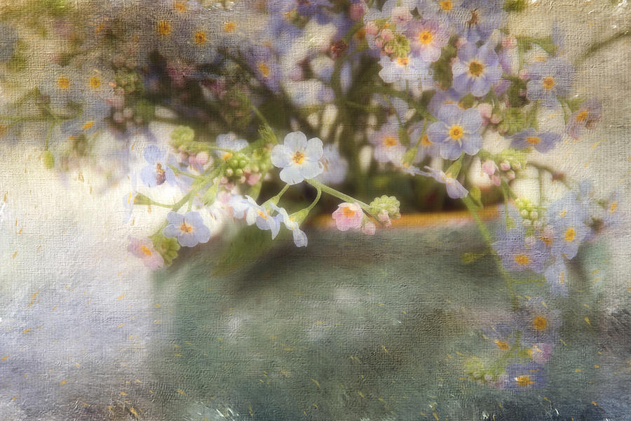 Forget-me-nots Photograph - Dreaming Of Forget-me-nots by Peggy Collins