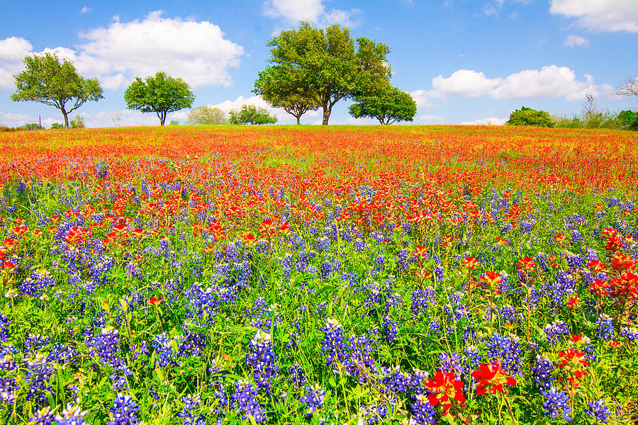 Bluebonnet Photograph - Dreaming Of Wildflowers by Ellie Teramoto