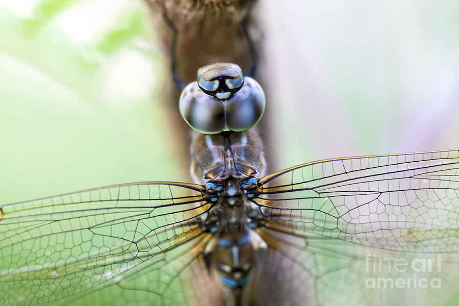 Dragonfly Photograph - Dreaming With A Dragonfly by Scotts Scapes