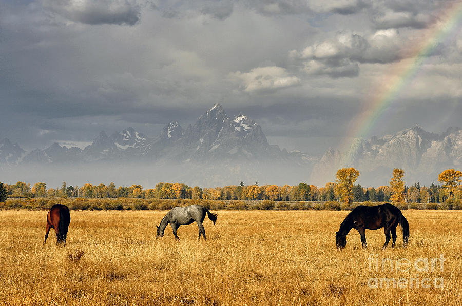 Horses Photograph - Dreams At The End Of The Rainbow by Deby Dixon
