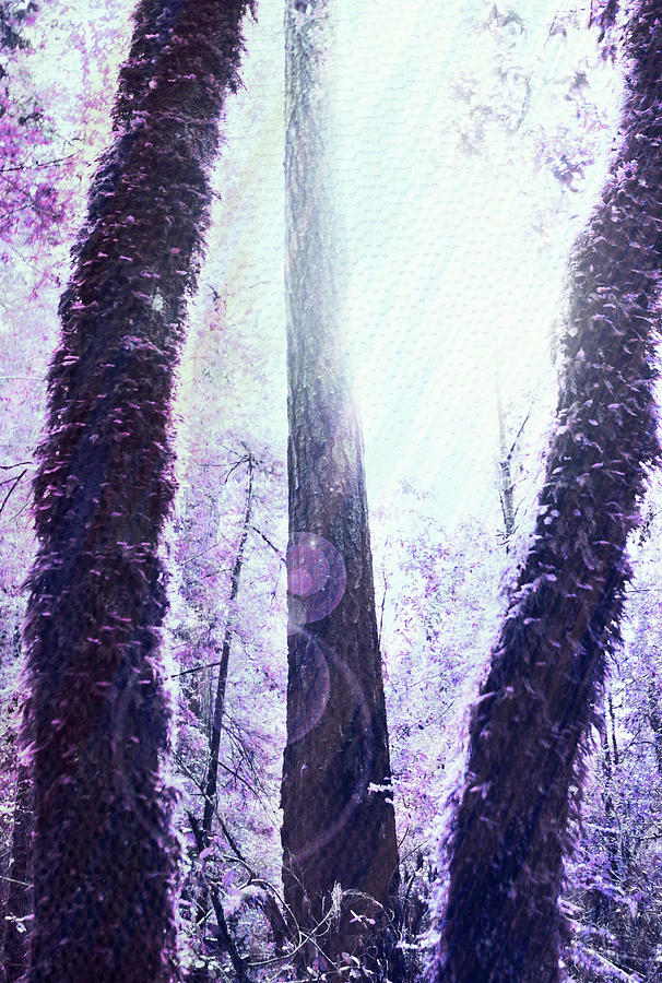 Image Manipulation Photograph - Dreamy Forest by Nicole Swanger