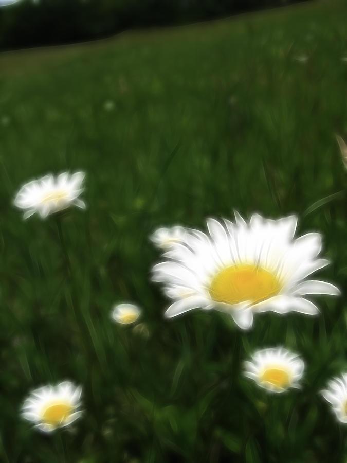 Flowers Photograph - Dreamy Gardens 10 by Rhonda Barrett