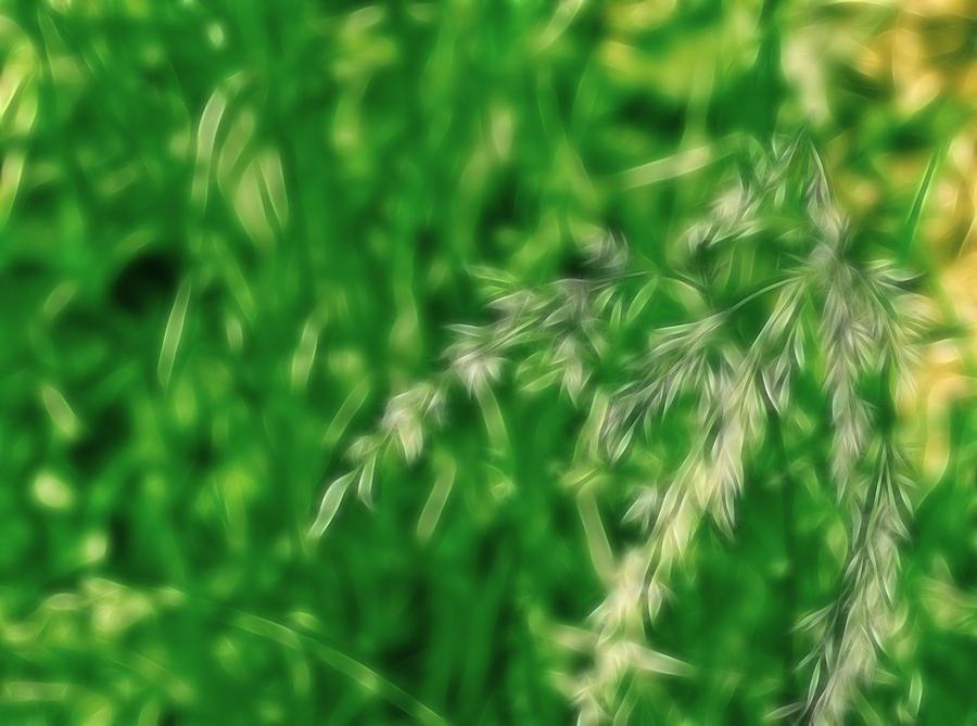 Manipulation Photograph - Dreamy Gardens 5 by Rhonda Barrett
