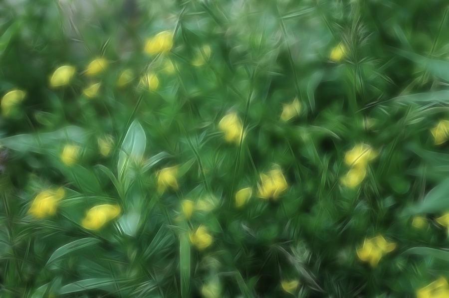 Flowers Photograph - Dreamy Gardens 9 by Rhonda Barrett