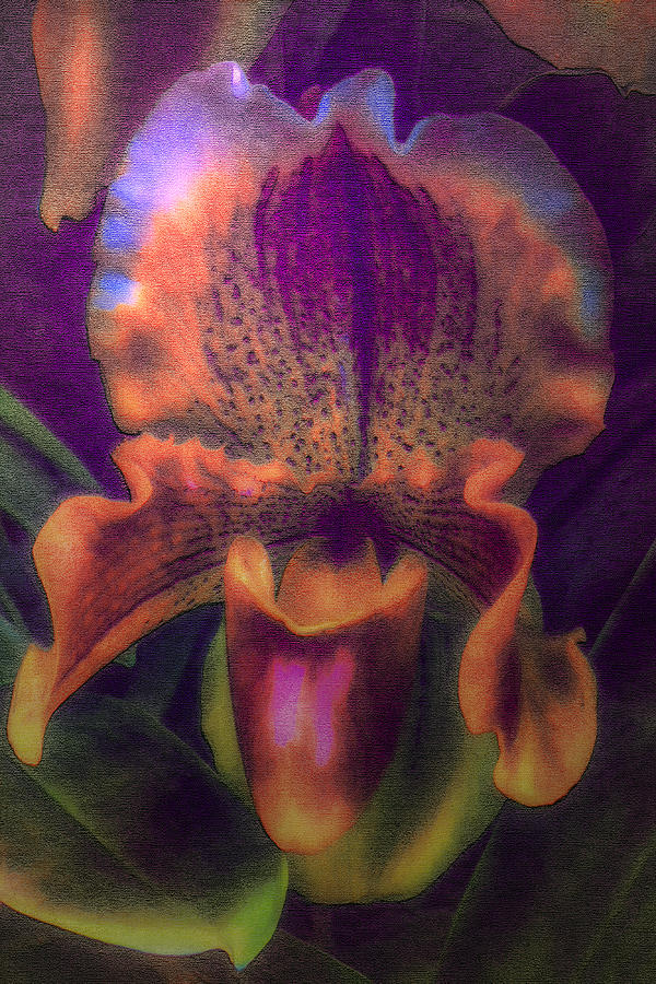 Digital Painting Digital Art - Dreamy Orchid by Jill Balsam