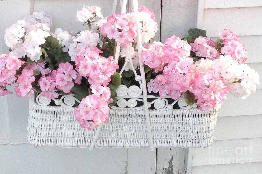Dreamy pink white hydrangeas in hanging basket shabby chic cottage shabby chic decor photograph dreamy pink white hydrangeas in hanging basket shabby chic cottage mightylinksfo