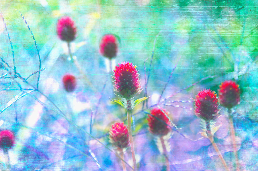 Photo Photograph - Dreamy Red Spiky Flowers 2 by Karen Stephenson