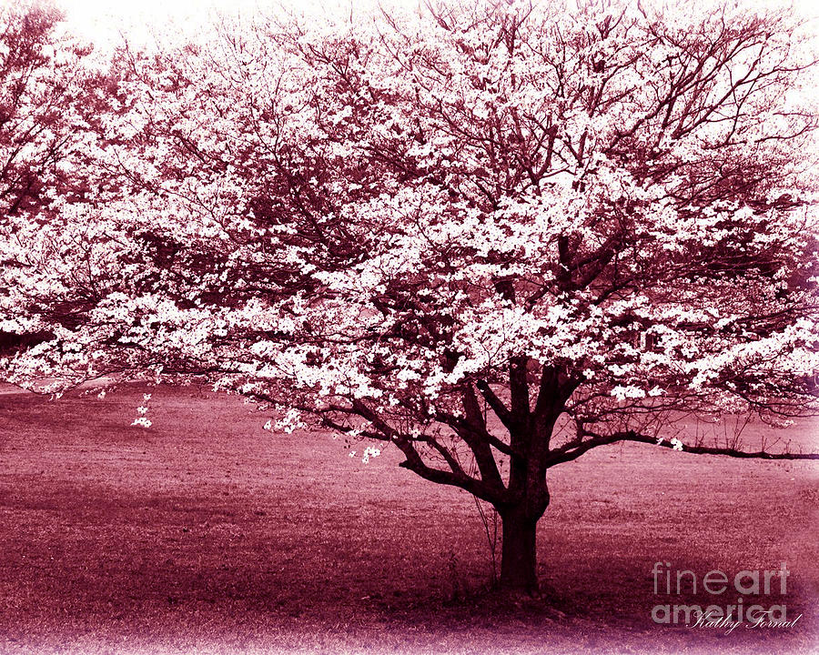 nature photography photograph dreamy surreal pink south carolina trees by kathy fornal - Pink Trees