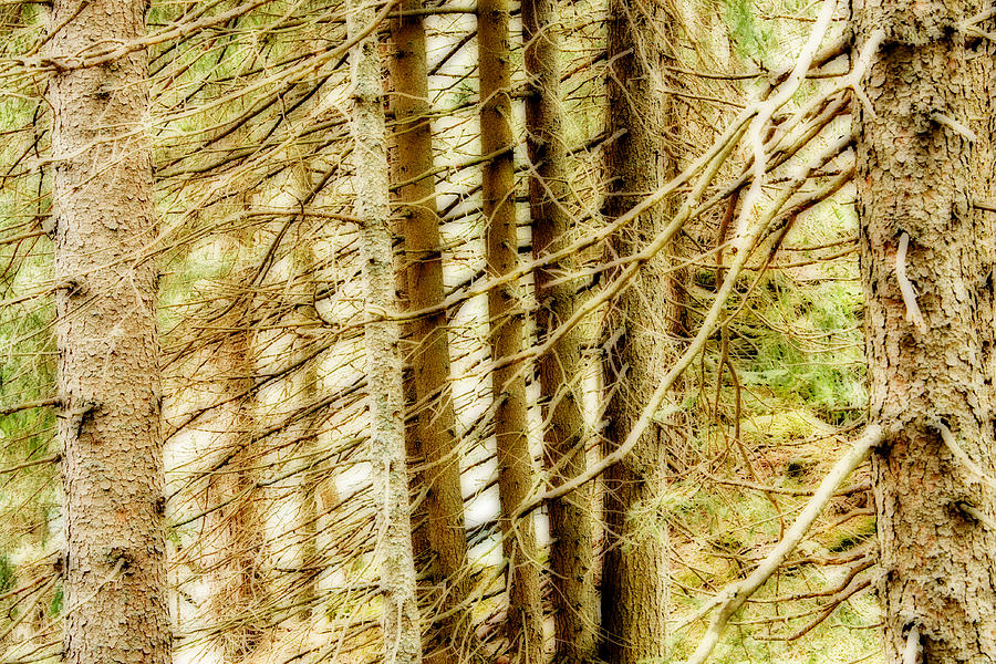 Trees Photograph - Dreamy Trees by Maurizio Incurvati