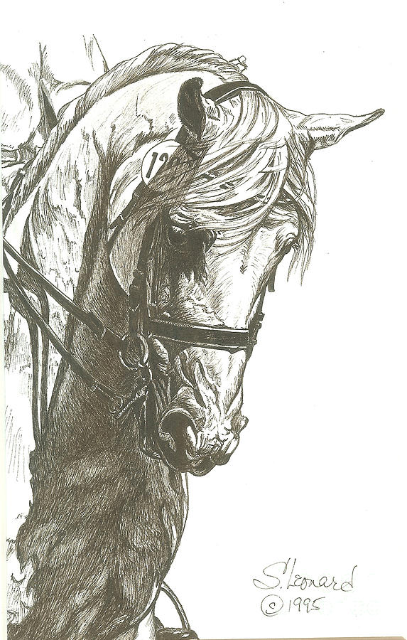 Dressage Drawing - Dressage Horse by Suzanne Leonard