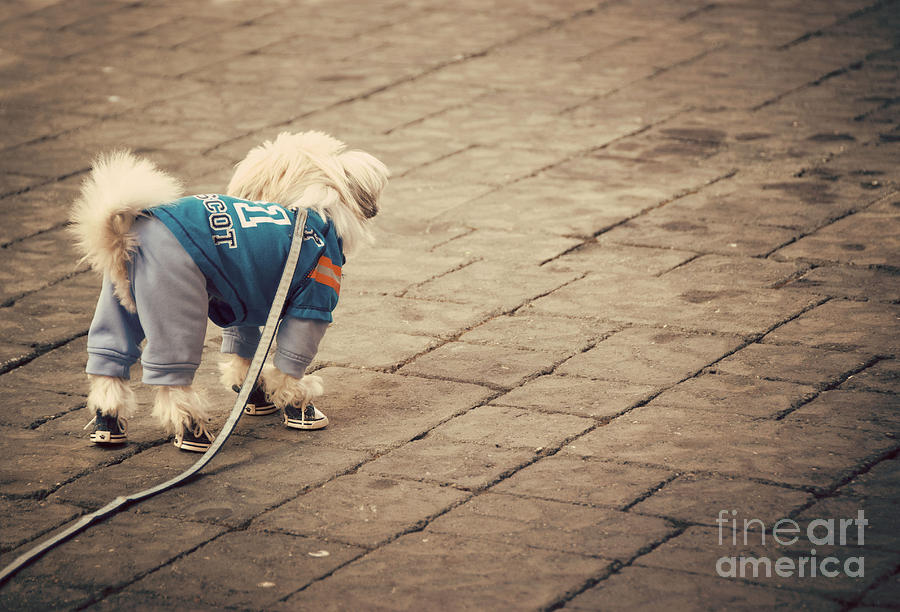 Adorable Photograph - Dressed Up Dog by Juli Scalzi