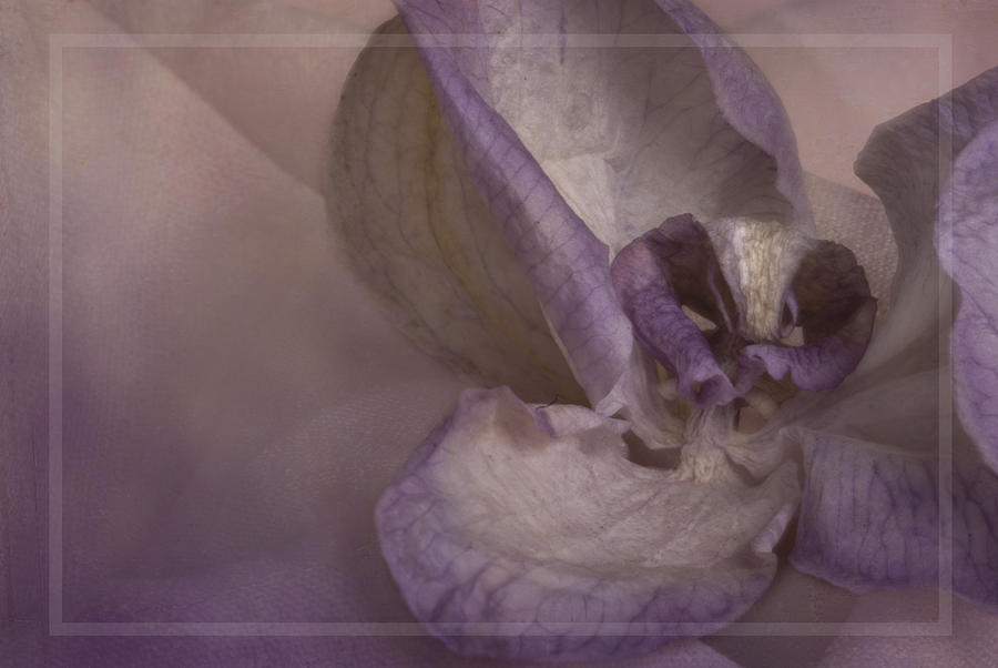 Dried Flower Photograph - Dried Orchid by Cindy Rubin