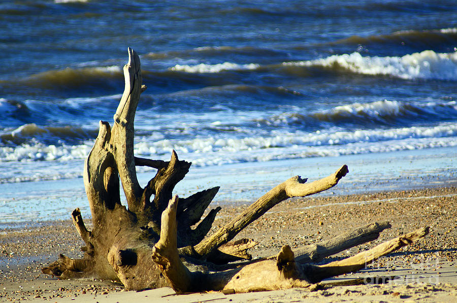 Wood Photograph - Drifted by Joe Geraci