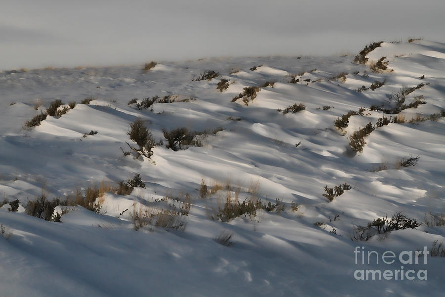 Snow Photograph - Drifting Around by Edward R Wisell