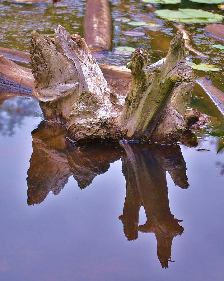 Wood Photograph - Drifting Reflections by Mary Zeman