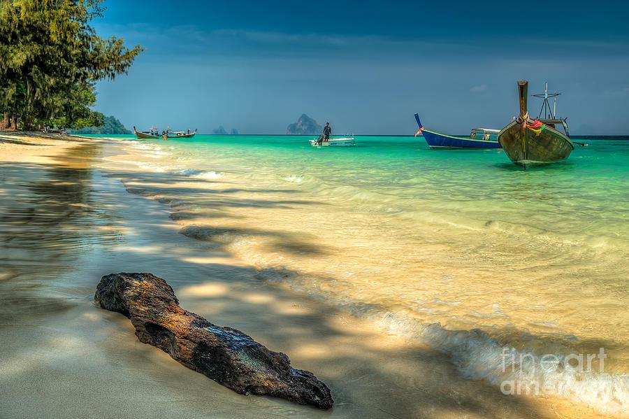 Beach Photograph - Driftwood by Adrian Evans