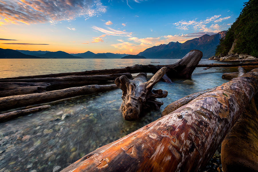 Horseshoe Bay Photograph - Driftwood by Alexis Birkill