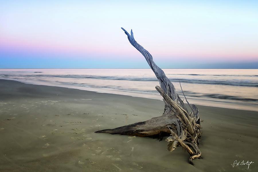 Beach Photograph - Driftwood At Dusk by Phill Doherty
