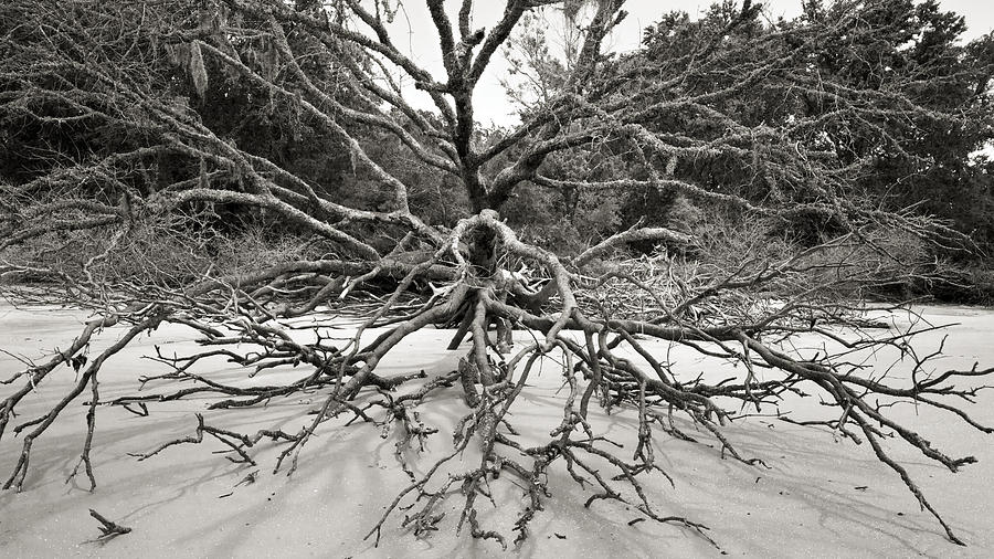 Beach Photograph - Driftwood by Barbara Northrup