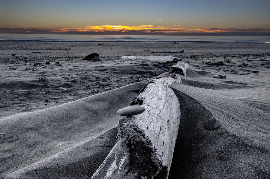 Gold Photograph - Driftwood In The Sand by Debra and Dave Vanderlaan