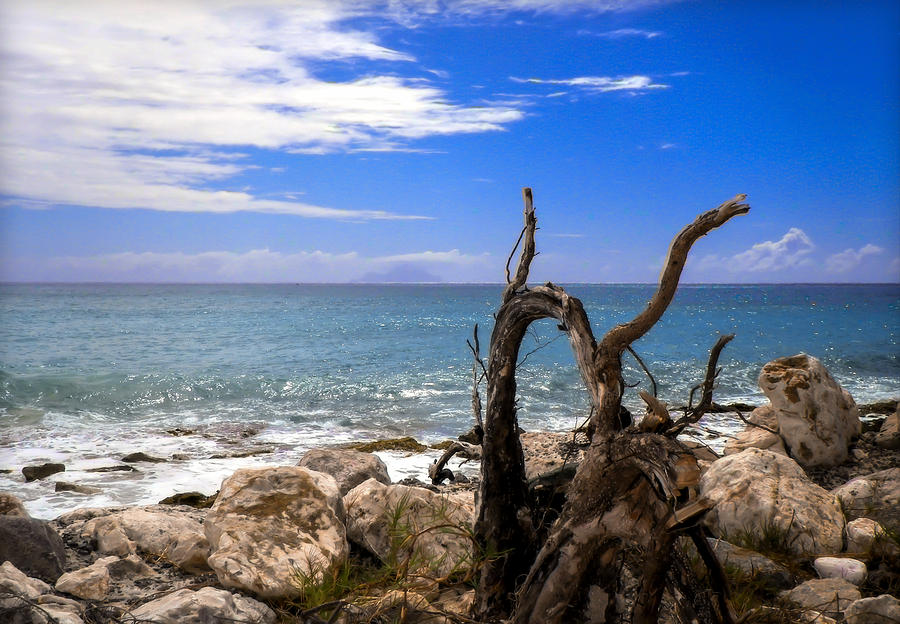 Driftwood Photograph - Driftwood Island by Karen Wiles