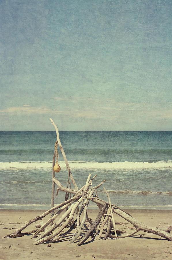 Driftwood Photograph by Jill Ferry
