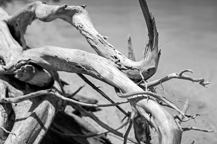Florida Photograph - Driftwood by Jonathan Gewirtz