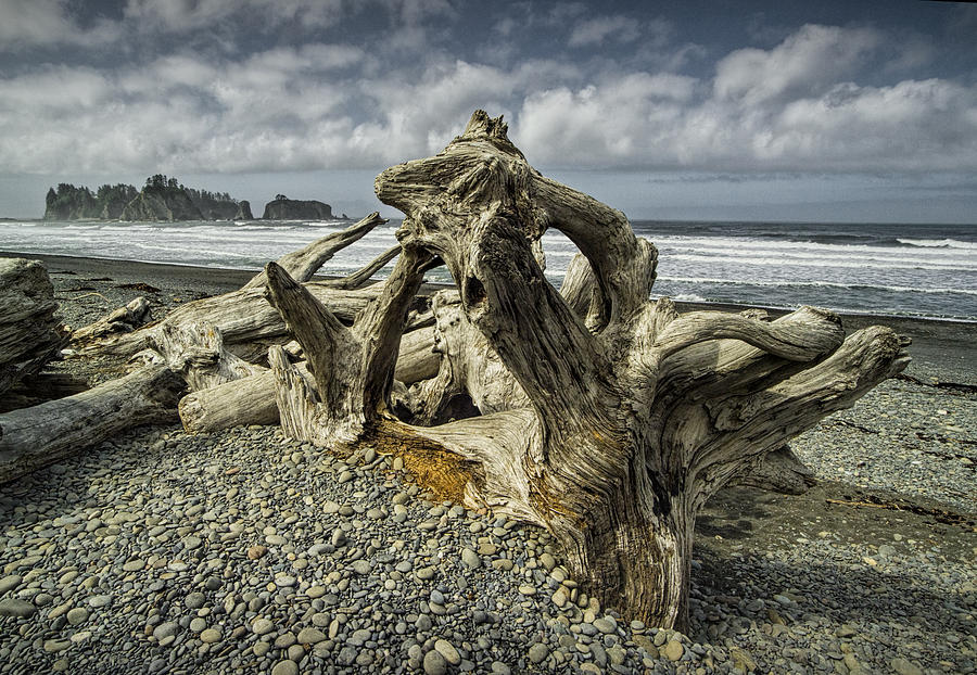 Art Photograph - Driftwood On Rialto Beach In Olympic National Park No. 144 by Randall Nyhof