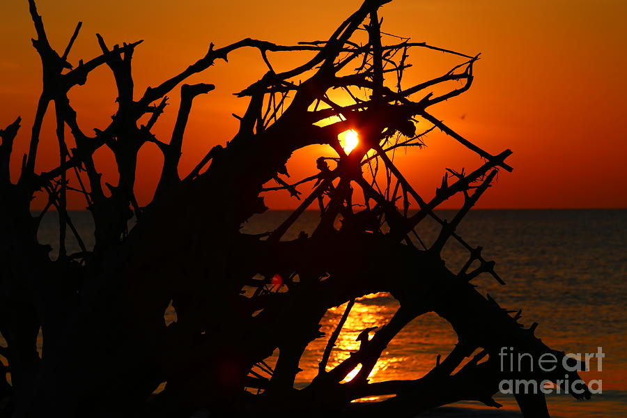 Jekyll Island Photograph - Driftwood Tangle by Marty Fancy