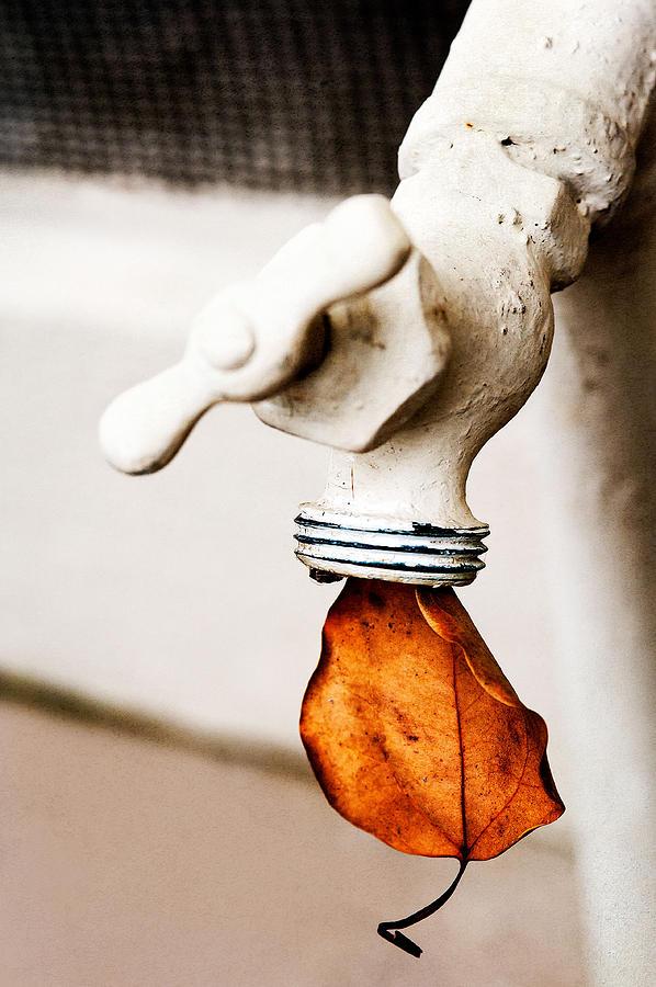 Drip Leaf Photograph by Bobbi Feasel
